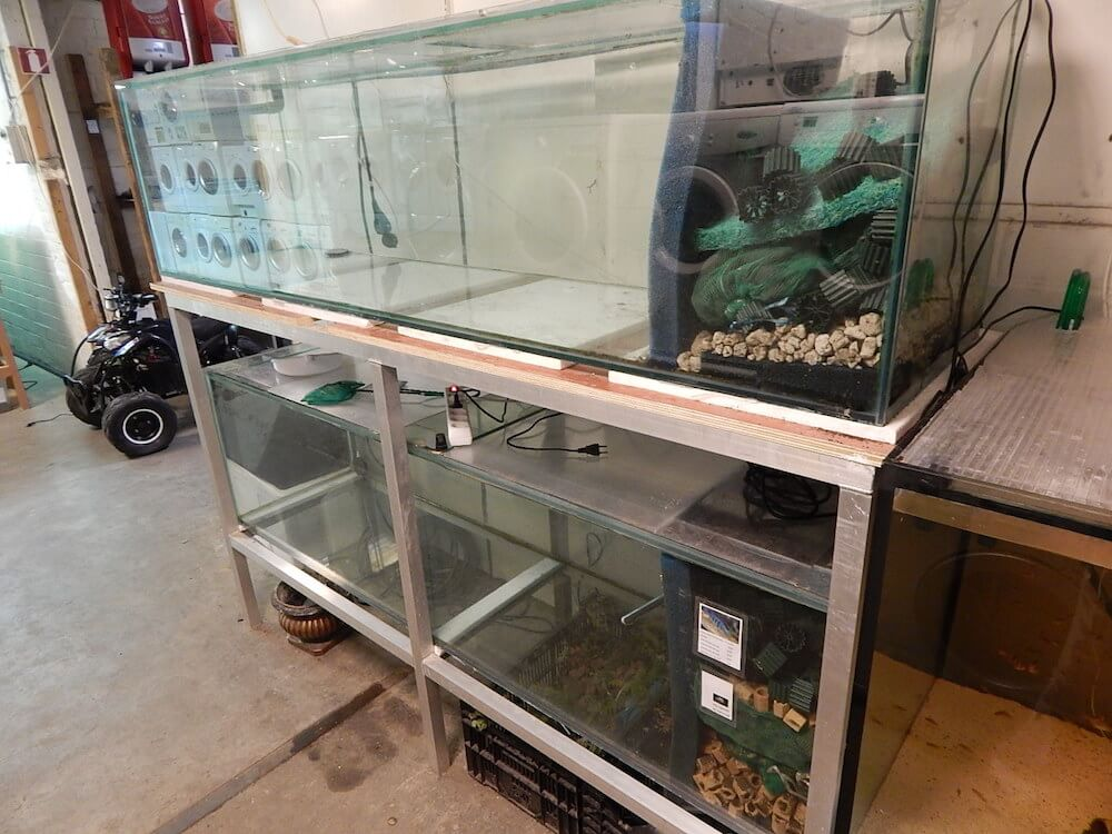 Welp Aquariumvissen en toebehoren   Goedkope aquaria en vissen IX-25